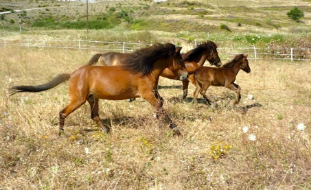 Summer 2012 Mares and foals