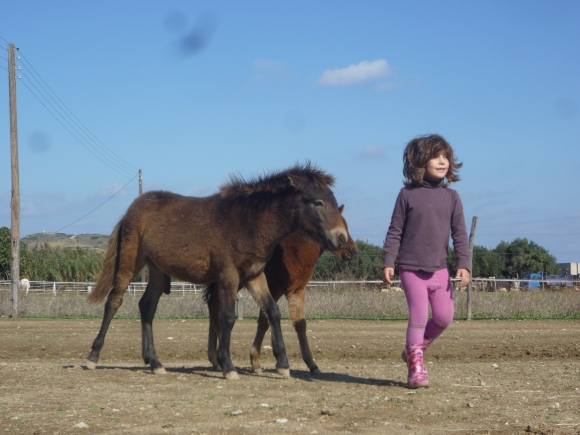 Tarpan and Orfeas as youngsters in 2010.