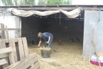 cleaning the hay barn argh!!