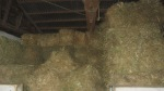 Oat straw in the stable