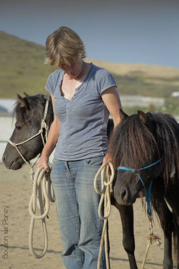 Skyros Island Horse Trust – 2015 in Review
