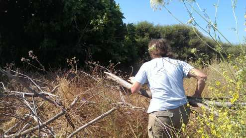 Mending hedges with branches